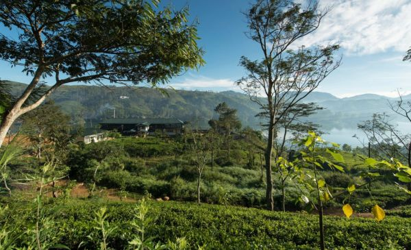 Nuwara Eliya: Ceylon Tea Trails