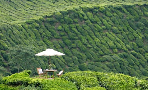 Cameron Highlands: Cameron Highlands Resort